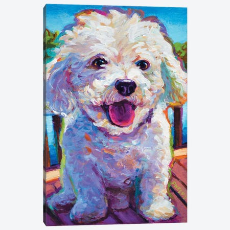 Bichon Frise Canvas Print #RPH4} by Robert Phelps Canvas Art