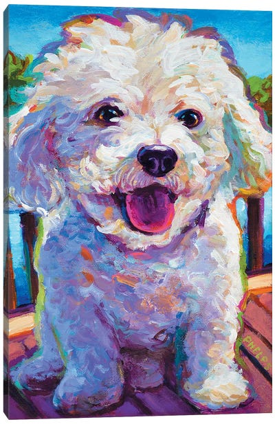 Bichon Frise Canvas Art Print