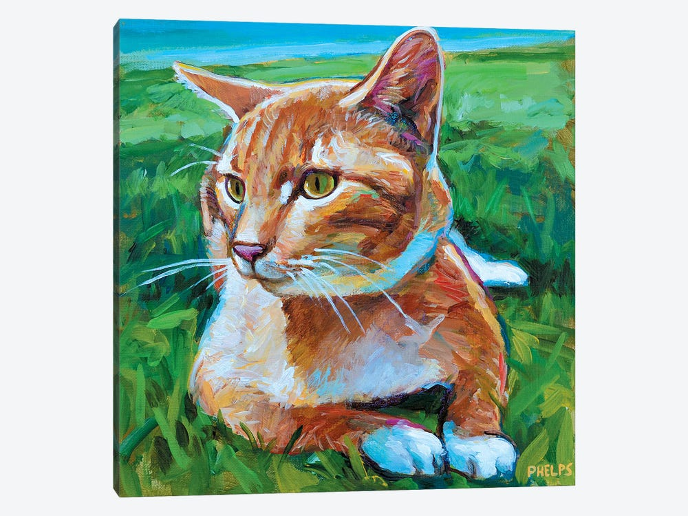 Orange Tabby by Robert Phelps 1-piece Canvas Print