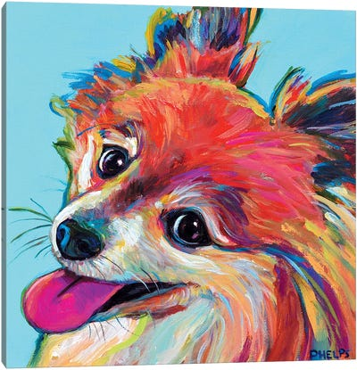 Pomeranian Canvas Art Print