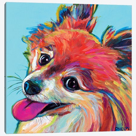 Pomeranian Canvas Print #RPH54} by Robert Phelps Canvas Art