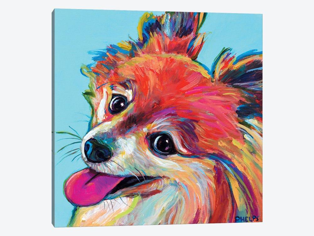 Pomeranian by Robert Phelps 1-piece Art Print