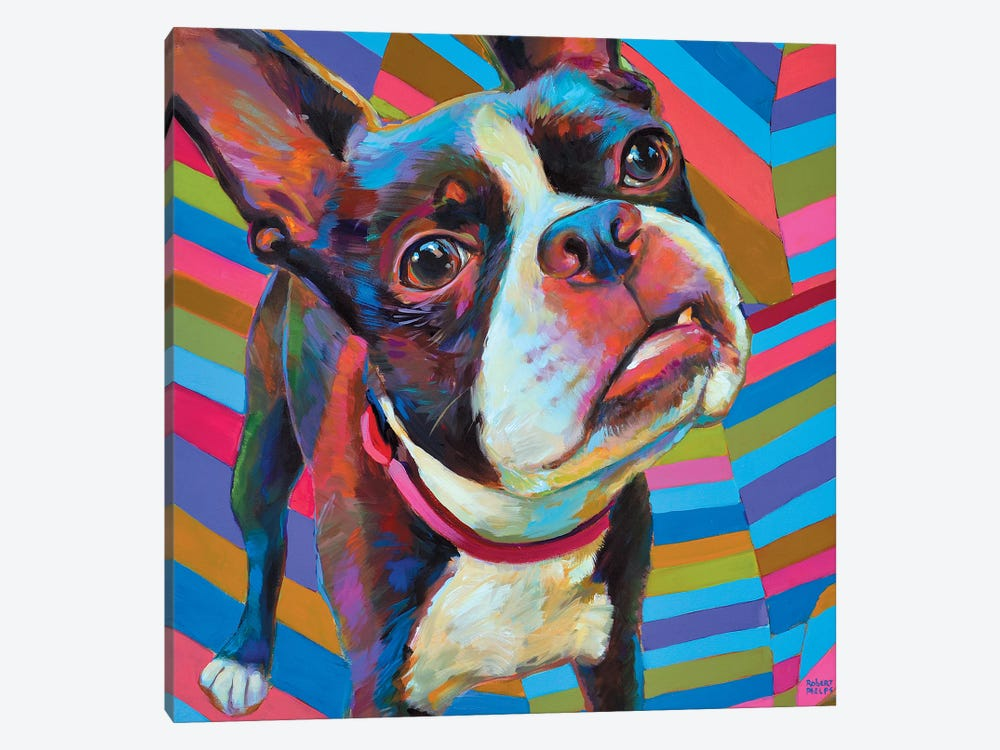 Psychedelic Boston Terrier by Robert Phelps 1-piece Canvas Wall Art