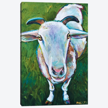 Sheep Canvas Print #RPH61} by Robert Phelps Canvas Wall Art