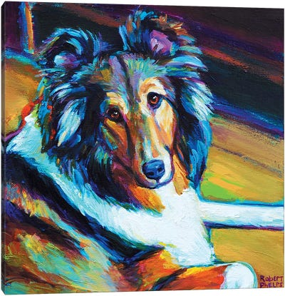 Sheltie I Canvas Art Print
