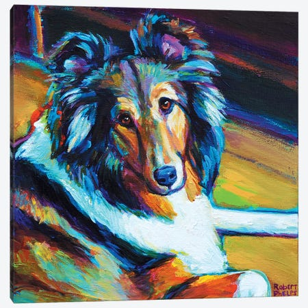 Sheltie I Canvas Print #RPH62} by Robert Phelps Canvas Art