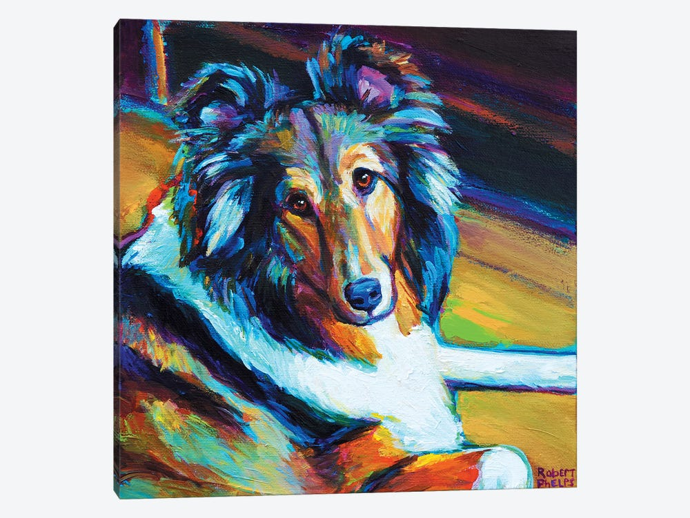 Sheltie I by Robert Phelps 1-piece Canvas Wall Art