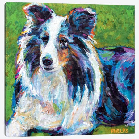 Sheltie In Grass Canvas Print #RPH64} by Robert Phelps Canvas Art Print