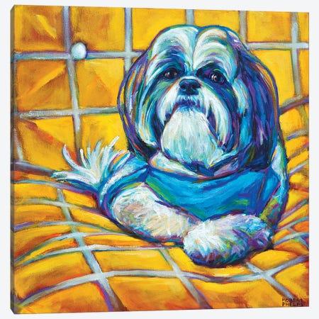 Shih Tzu Canvas Print #RPH65} by Robert Phelps Art Print