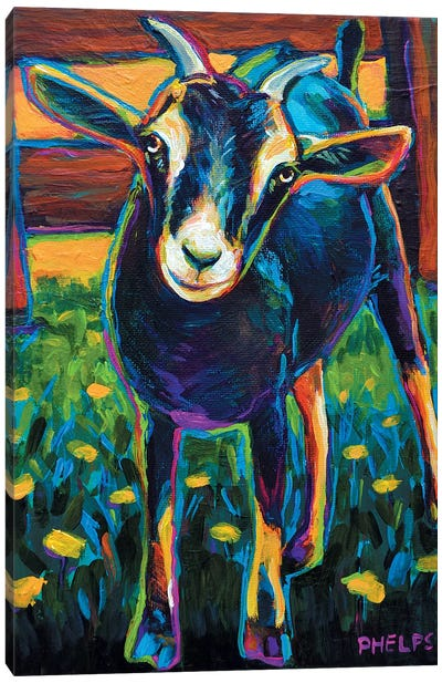 Black Goat Canvas Art Print
