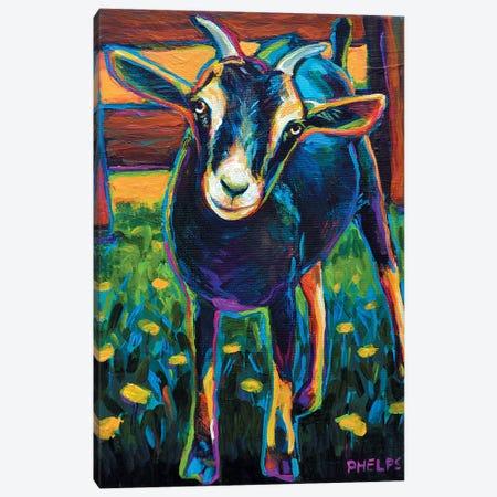Black Goat Canvas Print #RPH6} by Robert Phelps Canvas Artwork
