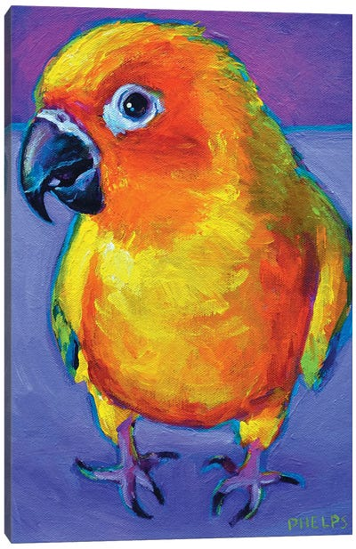 Sun Conure Canvas Art Print