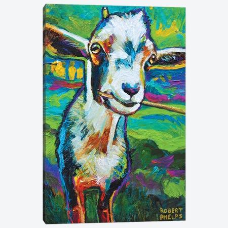 Theo The Goat Canvas Print #RPH73} by Robert Phelps Art Print