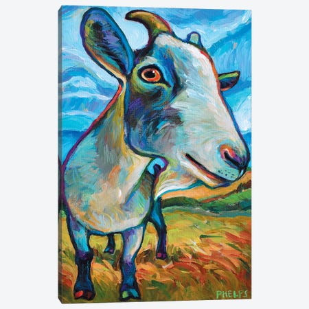 Van Goat Canvas Print #RPH76} by Robert Phelps Canvas Art