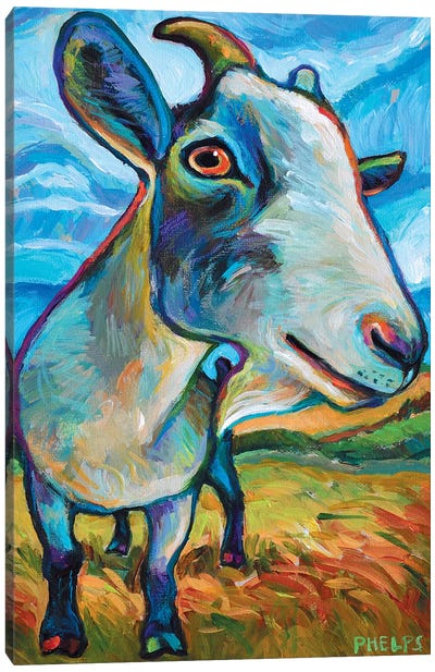 Van Goat Canvas Art Print