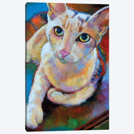 White Cat 3-Piece Canvas #RPH79} by Robert Phelps Canvas Print