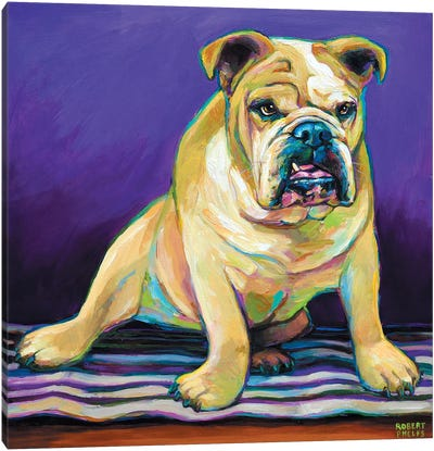 Blanket Bulldog Canvas Art Print
