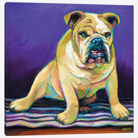 Blanket Bulldog Canvas Print #RPH7} by Robert Phelps Canvas Wall Art