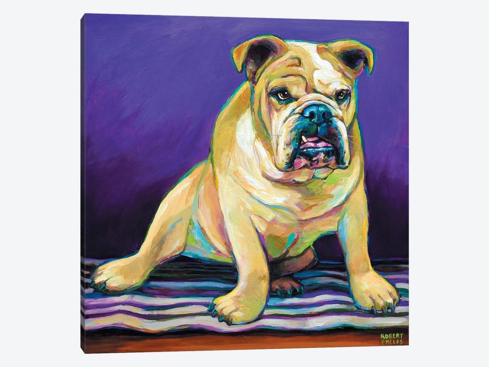 Blanket Bulldog by Robert Phelps 1-piece Canvas Print