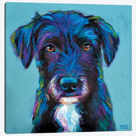 Winston The Black Schnauzer Canvas Print #RPH80} by Robert Phelps Canvas Wall Art