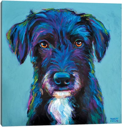 Winston The Black Schnauzer Canvas Art Print