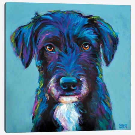 Winston The Black Schnauzer Canvas Print #RPH80} by Robert Phelps Canvas Wall Art