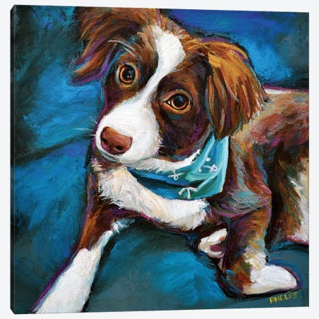 Australian Shepherd Puppy Canvas Print #RPH82} by Robert Phelps Canvas Art