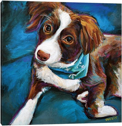 Australian Shepherd Puppy Canvas Art Print