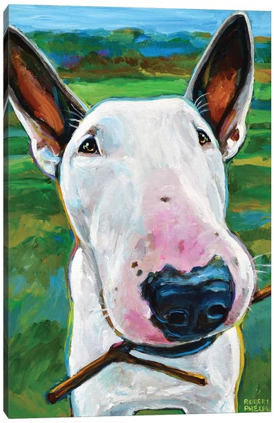 Bull Terrier with Stick Canvas Art Print