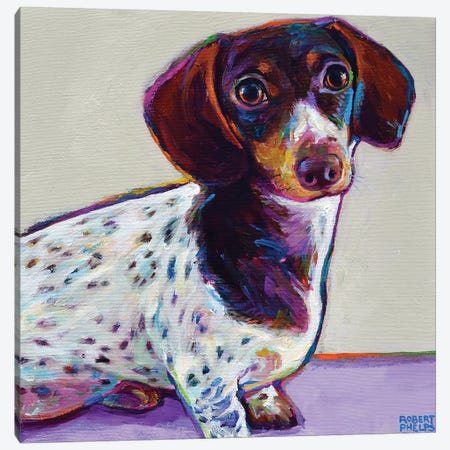 Buttercup the Dachshund Canvas Print #RPH86} by Robert Phelps Art Print