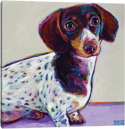 Buttercup the Dachshund Canvas Art Print
