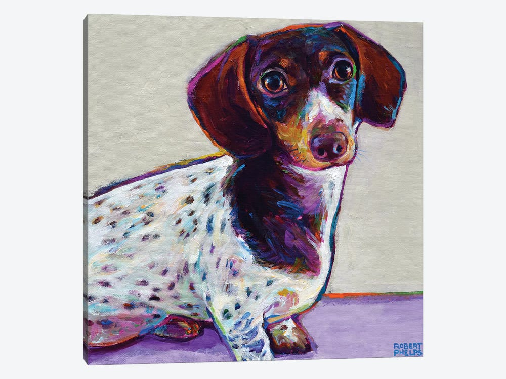 Buttercup the Dachshund by Robert Phelps 1-piece Canvas Wall Art