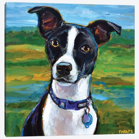Jack Russell Terrier Canvas Print #RPH99} by Robert Phelps Art Print