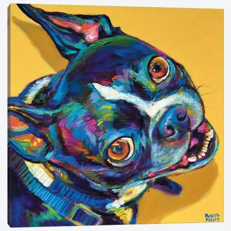 Boston Terrier Canvas Print #RPH9} by Robert Phelps Art Print