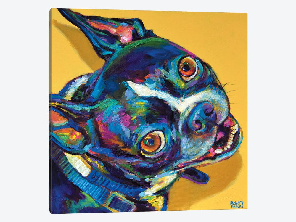 Boston Terrier by Robert Phelps 1-piece Canvas Art Print