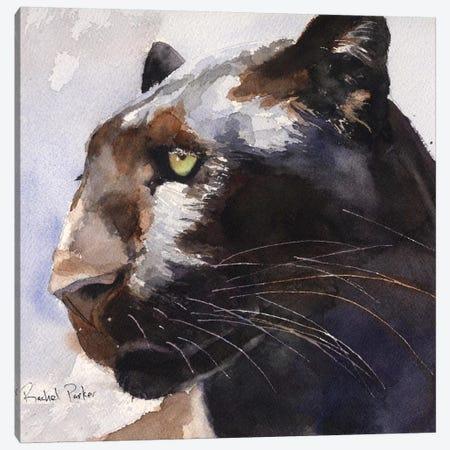 Black Panther Canvas Print #RPK100} by Rachel Parker Art Print