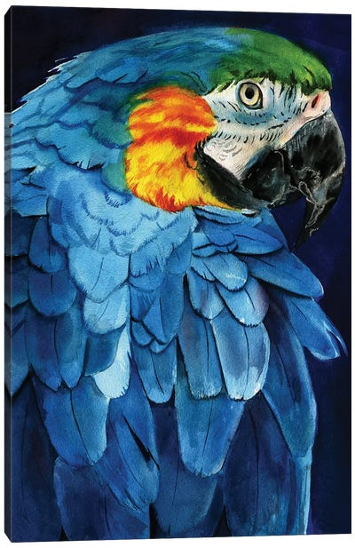 Blue Macaw Canvas Art Print