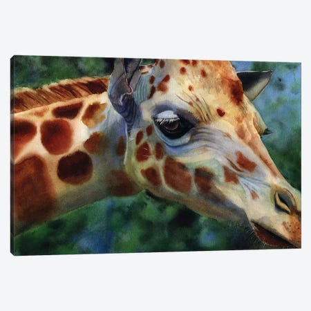 Giraffe Thoughts Canvas Print #RPK105} by Rachel Parker Canvas Artwork