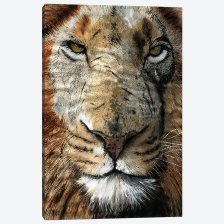 Lion Scars Canvas Print #RPK107} by Rachel Parker Canvas Art