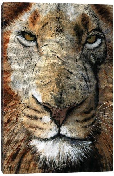 Lion Scars Canvas Art Print