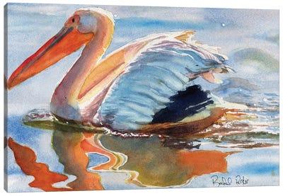 Pelican Reflections Canvas Art Print