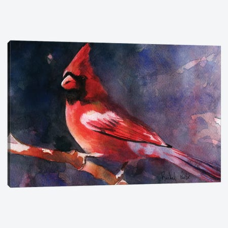 Red Cardinal Canvas Print #RPK112} by Rachel Parker Canvas Art