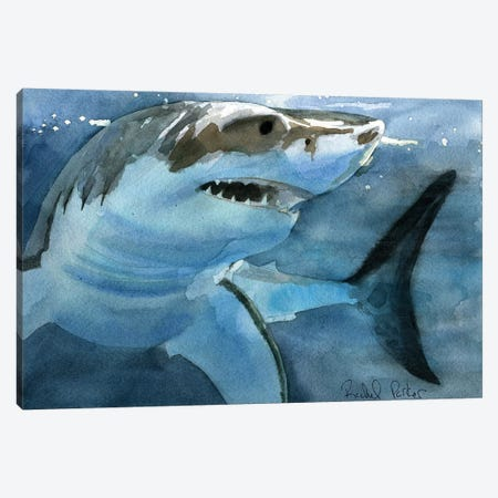 Sharky Canvas Print #RPK113} by Rachel Parker Canvas Art