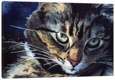 Nans Maine Coon Canvas Art Print