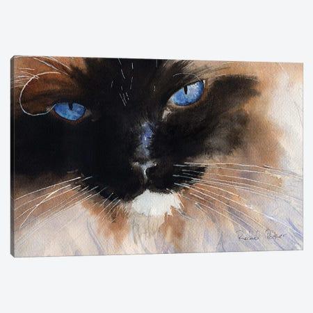 Ragdoll Eyes Canvas Print #RPK14} by Rachel Parker Canvas Art Print