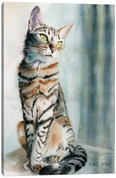 Tabby Lean Canvas Art Print