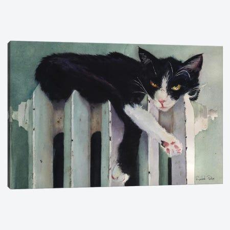 Toasty Tuxedo Canvas Print #RPK28} by Rachel Parker Art Print