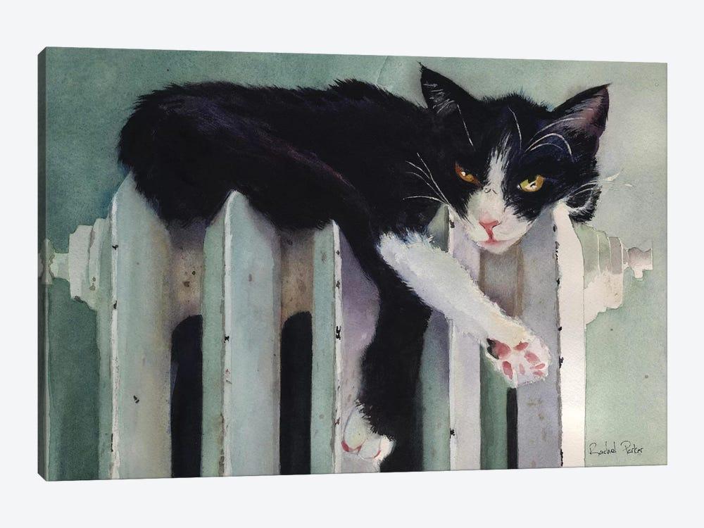 Toasty Tuxedo by Rachel Parker 1-piece Canvas Wall Art