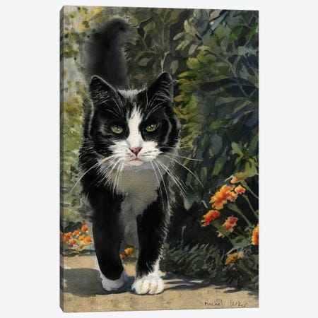 Tuxedo Stroll Canvas Print #RPK31} by Rachel Parker Canvas Art