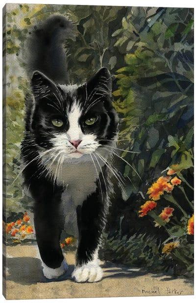 Tuxedo Stroll Canvas Art Print